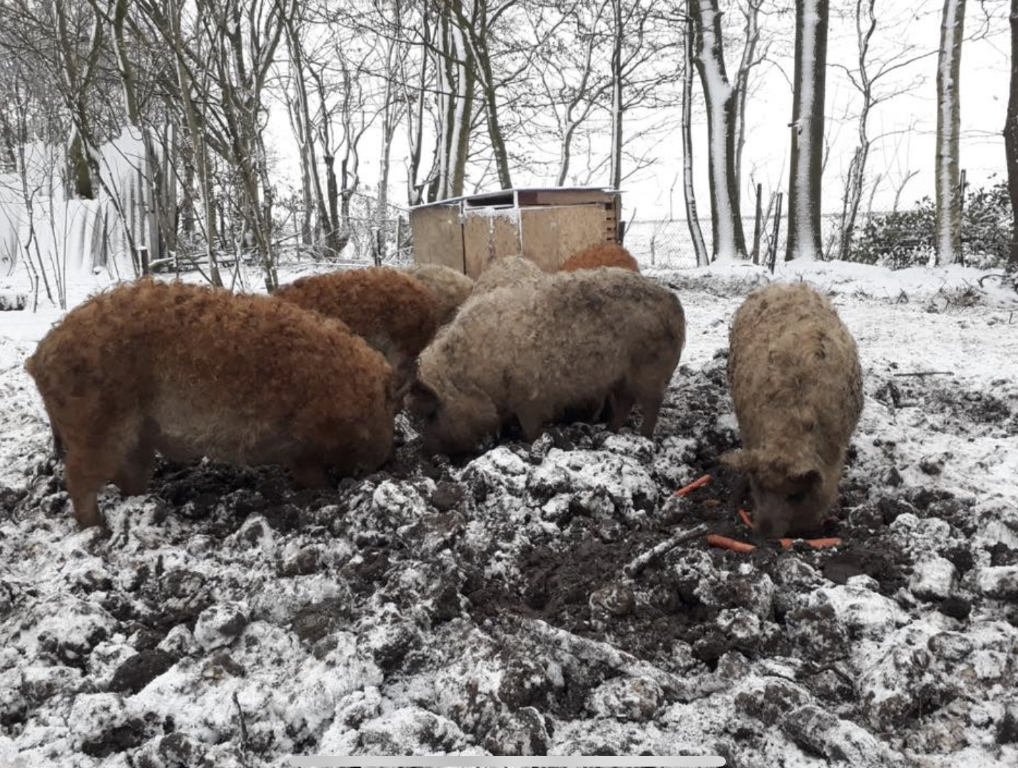 Snuyters in de sneeuw